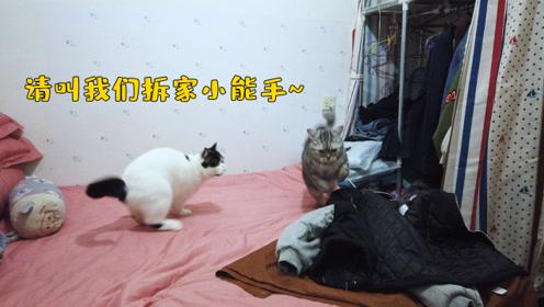 奶牛猫和虎斑猫:不是在拆家,就是在拆家的路上,兄弟,走起!