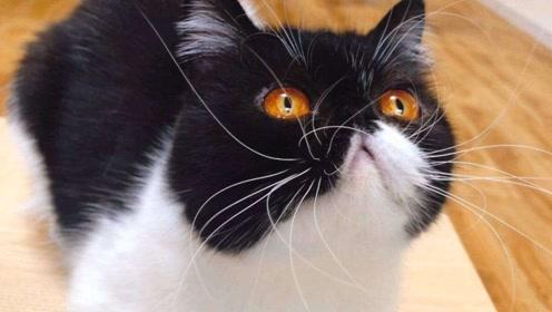为啥猫咪的胡子不可以剪,剪了会怎么样?路都不会走了