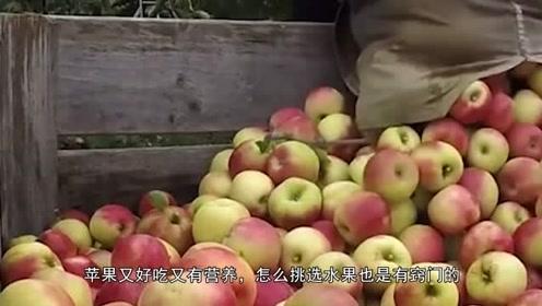买苹果,切记不是越红越好,死记一个诀窍,挑选的苹果又甜又好吃