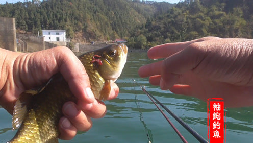 冬天坐在水里钓鱼,连杆大鲫鱼这样的鱼获再冷也不觉得冷