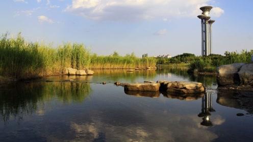 北京奥森公园,秋季赏银杏叶正当时,赶紧看看去吧