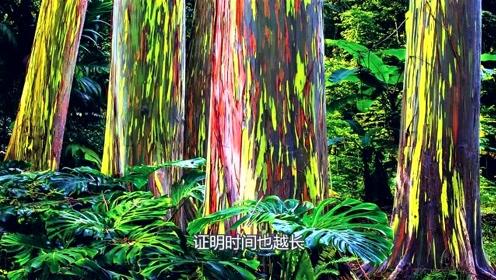 """北半球唯一会变色的树?代表它年龄的竟是色彩,据说一生""""换衣""""10多次?"""