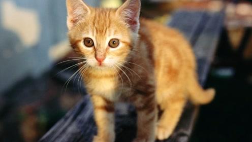 冬天猫咪的行为变化,不知道你注意到没有?