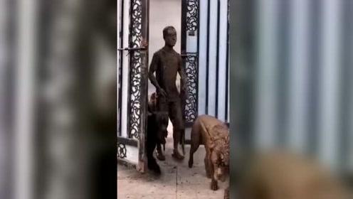 王者归来了,这是人遛狗还是被狗遛?