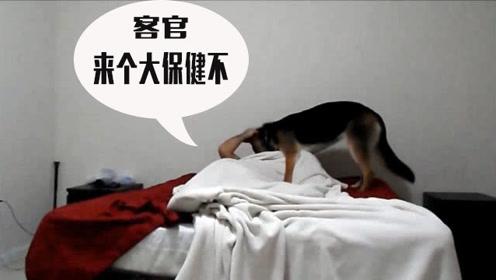 """狗狗吵醒熟睡的主人,在主人身上无情地踩来踩去,""""狗式按摩""""真是个绝活儿"""