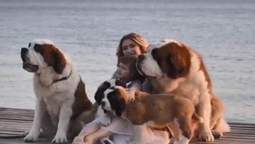 3种最危险的狗狗,看到最好绕路!
