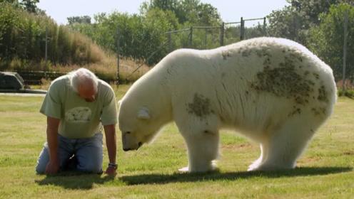 老人竟将北极熊当宠物,16年间长到700斤,画面却异常温馨