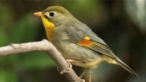 为何鸟的寿命很短,却看不见死去的鸟?原来还有这些原因
