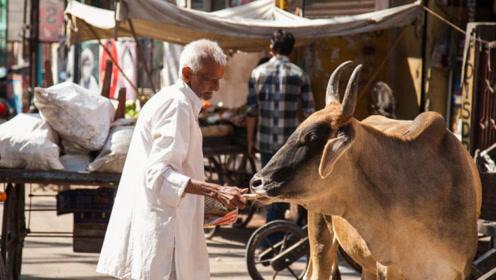 印度人不吃猪肉也不吃牛肉,那他们吃什么肉?说出来你肯定想不到