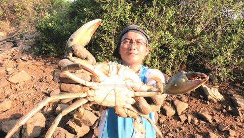 荒废盐田成了大螃蟹老窝,半斤一个算小的,看渔夫赶海真是过瘾
