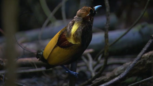为什么我们只能见到飞翔的鸟,却见不到死去的鸟?这下涨知识了