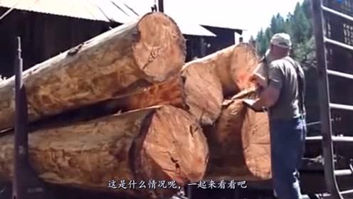 池塘发现一棵大树,被土豪80万买走,后来才发现亏大了