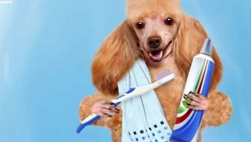 为啥动物们从不刷牙,牙齿还非常的健康,人类天天刷牙却还会有蛀牙