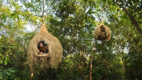 """野外求生:越南两兄弟徒手建造""""豪华""""树屋,看到成品后太惊艳了"""