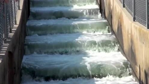 """""""鱼跃龙门""""你可能见过,但是鱼行阶梯你见过吗?看着很舒心"""