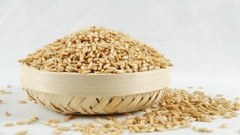 减肥吃什么主食?放下米饭、面条吃这些!