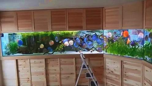 左右长达8米的超霸气鱼缸,精养的七彩鱼可以随便嬉戏,真令人羡慕