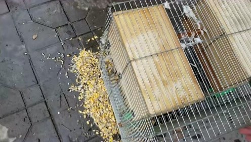论松鼠的过冬粮,我说这个箱子为什么那么重,打开一看全是粮食!