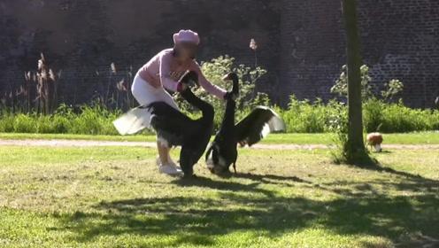 黑天鹅霸占公园,谁知这天遇到一名女子,大家憋住不要笑!