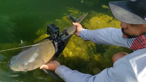 鱼的视角长啥样?将摄像机绑在鱼的身上,画面让人眼前一亮!