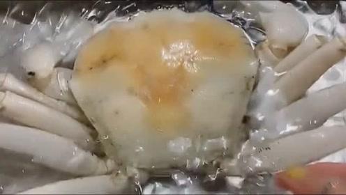 澳洲白蟹,国内一只要6000多哦!