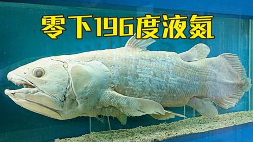 零下196度的液氮究竟有多厉害?看这条鱼的下场,为它默哀!