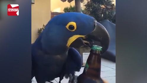 硬核起瓶器!小哥拿酒递出车窗,飞来的鹦鹉轻松打开