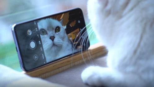 「甜宠VLOG」千万别让猫猫碰nova6,那就彻底没你什么事了
