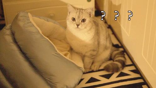 不是跑酷就是蹦迪,猫咪塔可躺床上开派对又挨揍了!