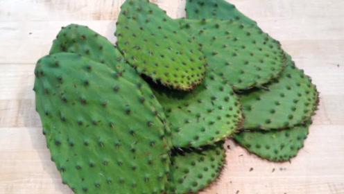 仙人掌在墨西哥什么地位,当地人:遍地都是仙人掌,不吃就浪费了