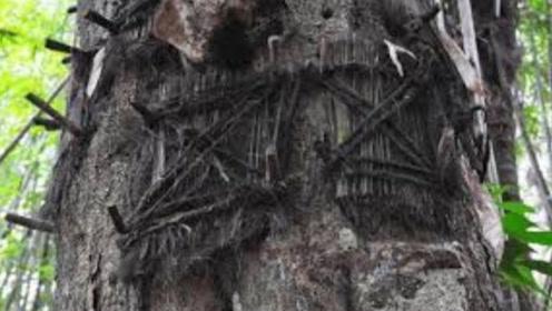 """印尼古老的""""树葬"""",这里面葬的是什么人?真相让人后背发凉"""