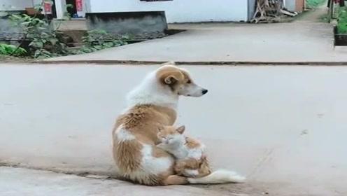 狗子孩子夭折了,我找来一只猫冒充,现在长大了我要不要告诉它们实情?