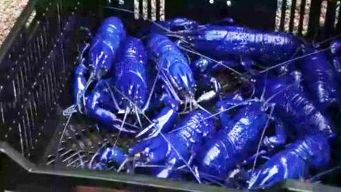 100万只龙虾中才出1条蓝龙虾,小伙得到了一筐,结果却让人意外