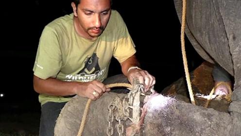 一头被人类虐待了50年的大象,获救之后的举动,让人心痛