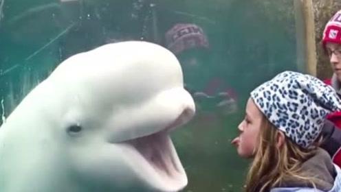 白鲸吓人从未失手?不料却栽在一个小女孩手里,网友:真丢鲸脸啊