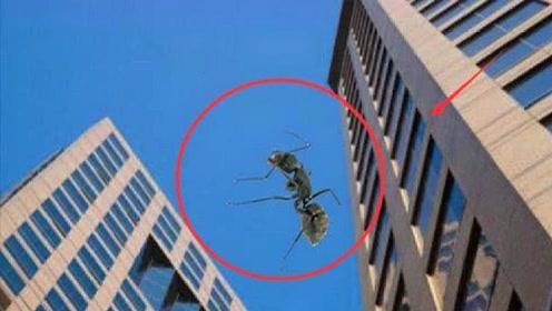 """""""蚂蚁""""从高空摔下会死吗?高速摄像机还原过程,网友:不可思议"""