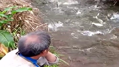 河沟里全是鱼,大爷却发愁了,又要吃一个月鱼了都吃吐了!