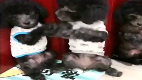 狗狗的宝宝太调皮了,看它们的小模样真可爱,萌萌哒!