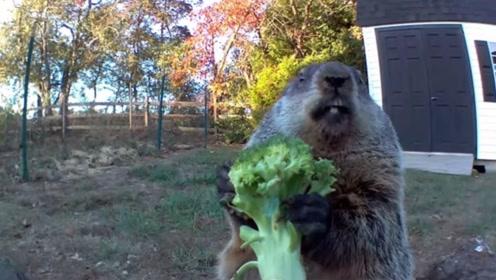老外在庭院种菜,却总被偷,监控拍下了偷菜贼