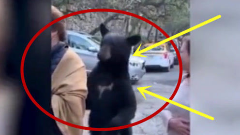 """隔着屏幕被吓哭!黑熊起身对美女""""打招呼"""", 结果太意外!"""