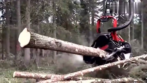 看看德国先进的伐木机械,真的太厉害了,日伐几百棵树的效率!