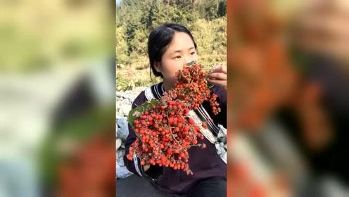 深山里最开胃的果子,有吃过的吗?