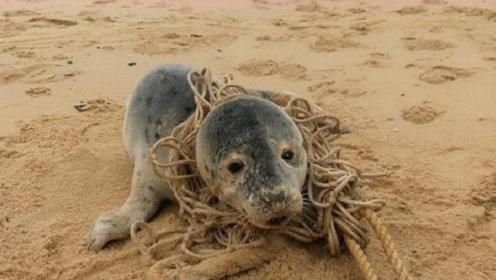 当救援人员帮海豹把多年缠绕的绳子打开后,网友:瞬间泪奔了!