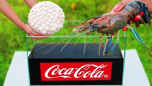 可乐曼妥思实验又玩新花样,在里面放入一只龙虾,结果你猜怎么着