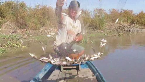 农村人传统的捕鱼方法,抄网捞鱼就是快,一网就是一群鱼!