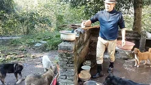 退休老伯每月掏2000元,收养17条流浪狗:为了它们从不出远门