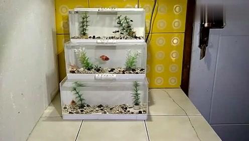 小伙用pvc板做水族鱼缸,几十块钱的成本,做出上千元的效果!