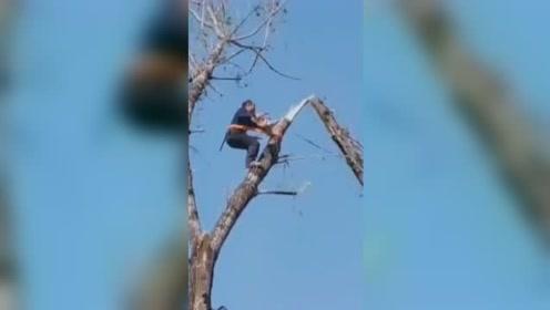 大自然的反杀!男子枝头锯树险被断枝从空中拽落