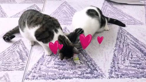 家庭伦理剧变悬疑剧?猫吃个猫条这么难吗?