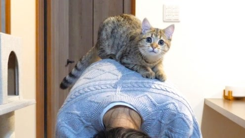 趣味萌宠:可爱小猫咪和主人玩耍